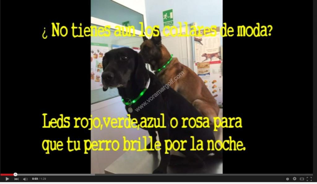 ¿ Aún no tienes los collares de moda? Haz que tu perro brille por la noche y no se pierda. Tenemos en todos los colores, rojo, azul , verde o rosa. !! Vena a elegir el tuyo!!