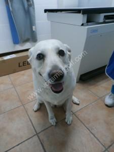 Wendy nos visitó por un tumor en su pata.