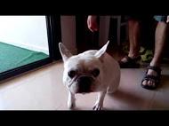 Esta es Kira en casa antes de venir, comenzando con una debilidad de las patas de atras.