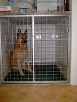 Hospitalizaci N De Nuestras Mascotas